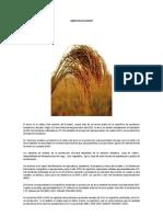 info_tecnica_arroz.pdf
