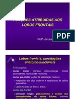 Lobo Frontal