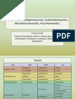 Ustilaginomycetes, Exobasidiomycetes, Microbotryomycetes, Pucciniomycetes.