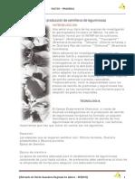 04 Establecimiento y producción de semilleros de leguminosas