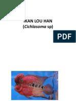 Budidaya Ikan Louhan.pptx