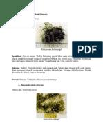 spesies alga hijau