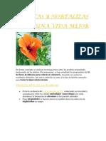 Plantas y Hortalizas