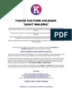 Tissue Culture Saint Waleric PR