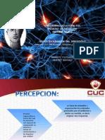 psicobiologia 3 percepcion