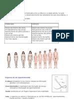 Ciências 9º - sist reprodutor resumos