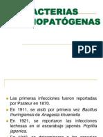Bacterias Entomopatogenas