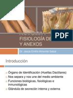 3-Anatomia de La Piel-curso de Suturas (2)(1)