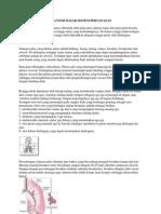 Anatomi Dasar Sistem Pernafasan