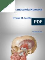Practica Anatomia