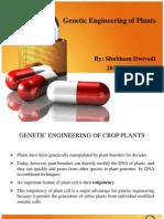 Genetic Engineering of Plant (2)
