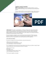 Como Alimentar Gatitos Recien Nacidos
