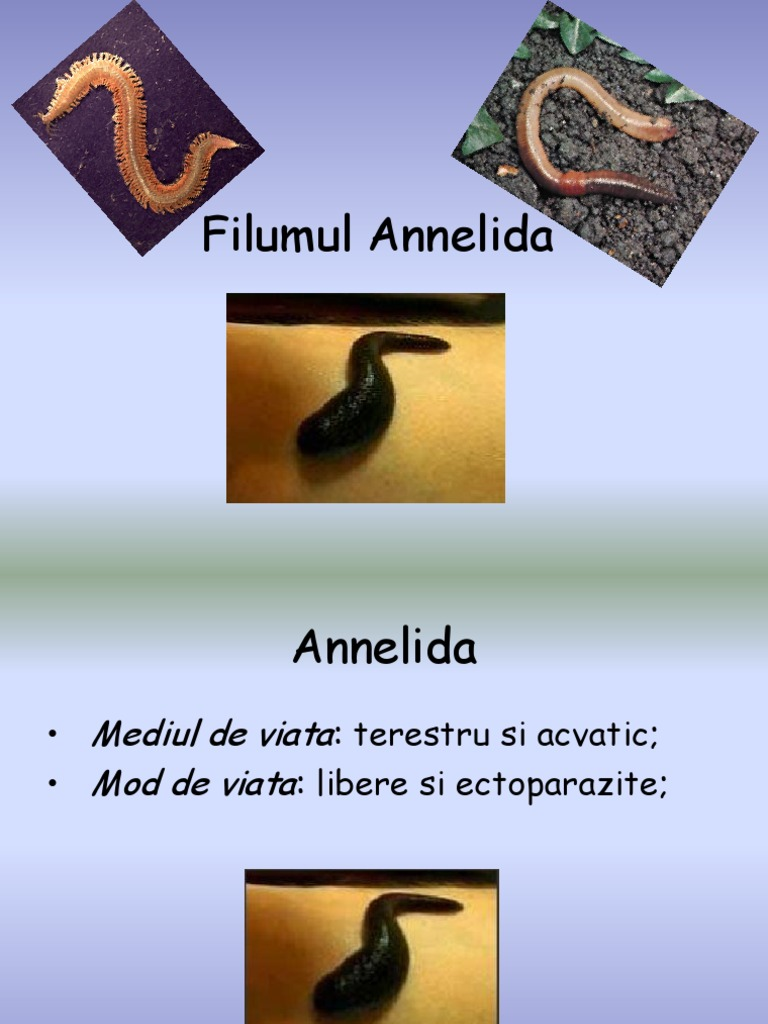 biologi annelida, Habitat aschelminthes