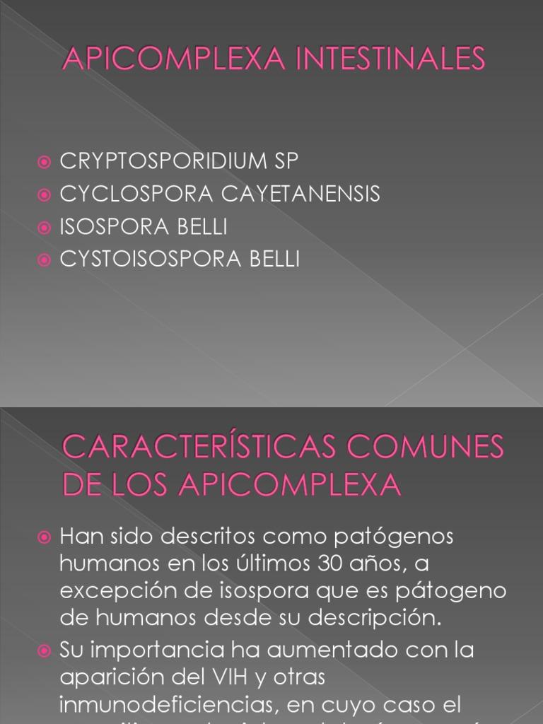 parazita apicomplexa