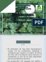 Enfermedades Del Crisantemo
