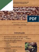 Envenenamento Equino pela casca de café (Coffea