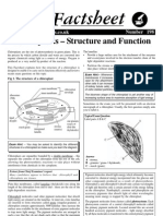 Chloroplasts Structure and Function Factsheet