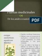 Plantas medicinales andes ecuatorianos