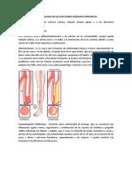 Fisiopatologia de Las Afecciones Arteriales Perifericas