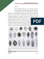 Foraminifera Besar