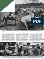 Primavera-Report von 1961 2
