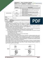 2012 s4 Citeam Bim3 Gp07 Censo de Fenotipos