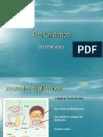 Filo Cnidarios