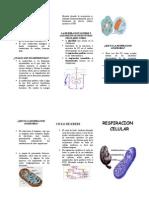 Qué es la respiración celular Tríptico