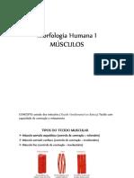Morfologia Humana I_Aula Muscularr