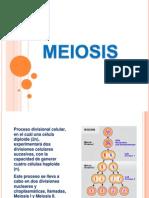 2-Meiosis y Gametogenesis