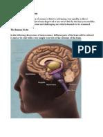 Neuroscience A