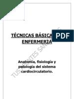 Tbe- Corazon Aparato Circulatorio