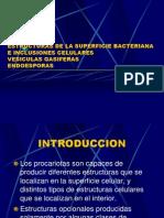 Estructuras de La Superficie Bacteriana e Inclusiones Celulares