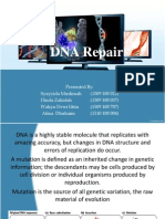 Kel.1_DNA Damage Response and Trancription