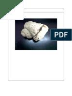 Jenis Fosil