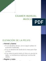 Examen Manual Muscular