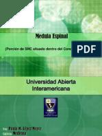Medula Espinal950