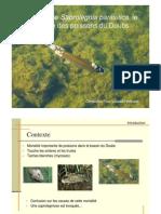 Presentation Doubs Saprolegnia Parasitica
