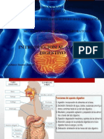 Introduccion Al Sistema Digestivo. Janeth Godinez Santos[1]