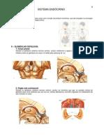 Anatomia - Sistema Endocrino