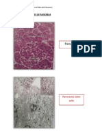 Practical Histology of Pancreas
