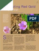 Saffron Case Study