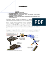 Carbono y Plomo
