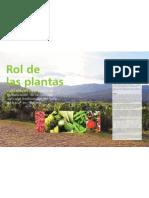 Rol de las plantas cultivadas en los procesos de globalización de las culturas agrícolas tradicionales del Valle de Iraca* en Boyacá