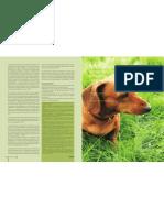 Melanoma en cavidad oral de un canino, reporte de un caso.
