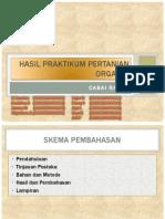 Presentasi No_5_9_Pertanian Organik Cabe Rawit