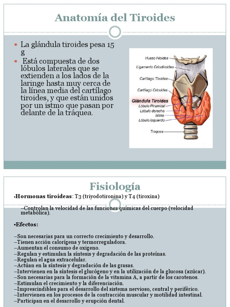 Anatomia de Tiroides