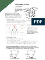 Fisiologia - Endocrino v - Sistema Reproductor Masculino y Prolactina
