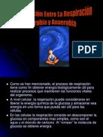 comparacionentrelarespiracionaerobiayanaerobia-120126143418-phpapp02