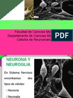 4 - Neurona - Sinapsis - Neurotransmisores - Cromatolisis